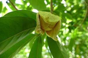 SS 2015-02-05 mystery flower  1  R
