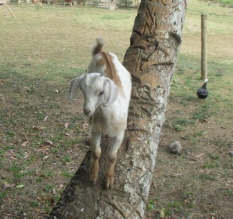 2015-12-10 tree-climbing kid Cr