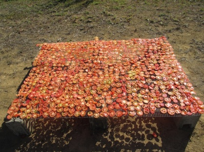 2014-08-27 sundried tomatoes 4  R.jpg